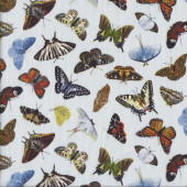 Beautiful Butterflies on Light Blue Insect Quilting Fabric