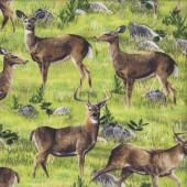 Deer on Grass Hidden Valley Wild Animal Quilting Fabric
