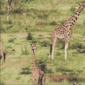 Giraffes African Safari Green Savannah Quilting Fabric