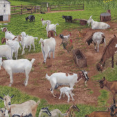 Goats Farm Animal Grass Billy Goat Quilting Fabric