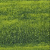 Fields of Grass Paddocks Nature Landscape Quilting Fabric