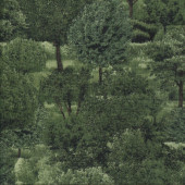 Dark Green Trees Nature Landscape