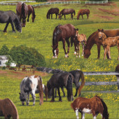 Horses on Grass Farm Animal Country Quilting Fabric