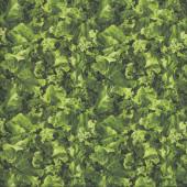 Kale Vegetable Veggie Kitchen Quilting Fabric