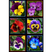 Beautiful Pansy Flowers Pansies Quilting Fabric Panel