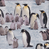 Emperor Penguins and Chicks on Ice Wildlife Bird Quilting Fabric