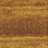 Fields of Wheat Paddocks Nature Landscape Quilting Fabric