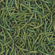 Green Beans on Black Veggie Quilting Fabric