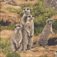 Meerkats African Savannah Grass Wildlife Quilting Fabric