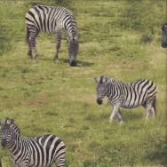 Zebras African Safari Green Savannah Quilting Fabric