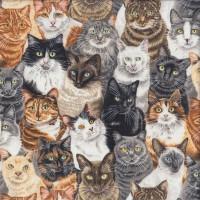 Cat Breeds Tabby Siamese Ragdoll Quilting Fabric